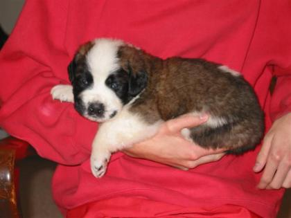Ebony, 4 weeks