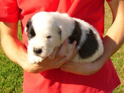 Jasper, 3 weeks