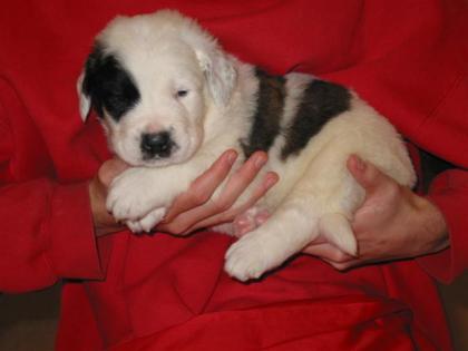 Jasper, 4 weeks