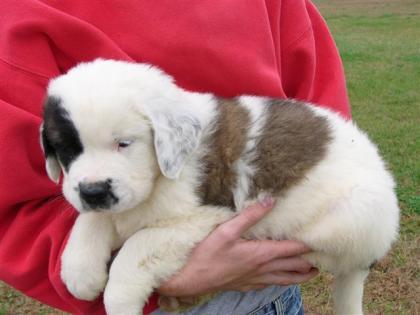 Jasper, 6 weeks