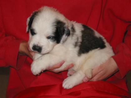 Mica, 4 weeks