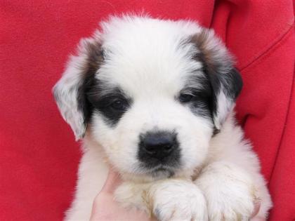 Mica, 5 weeks